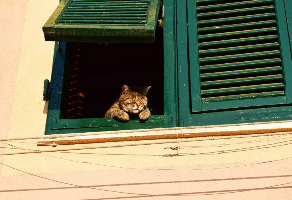 Cat relaxing on window